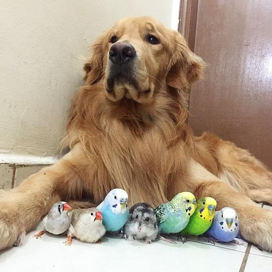 Dog Hamster Parrot 01