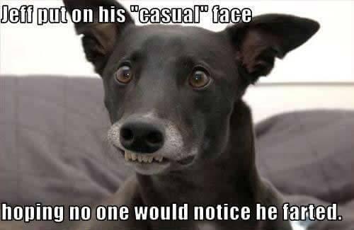 Dog Meme 07