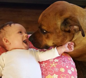 Babies and big dogs 01