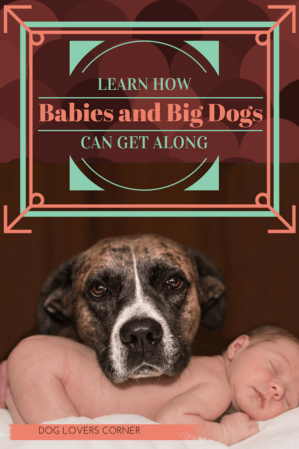Babies and big dogs