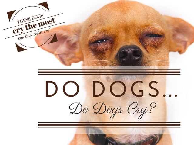 Dogs Cry